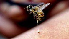 Arı Sokmasının Zararları