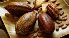 Kakaonun Ve Kakao Yağının Zararları