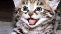 Evde Kedi Beslemenin Zararları