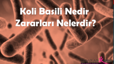 E. Coli (Escherichia coli) Nedir? Koli Basili Zararları