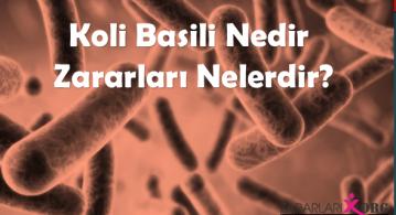 E. Coli (Escherichia coli) Nedir? Koli Basili Zararları