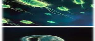 Mikroskobik Canlıların Zararları ve Faydaları