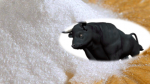 Taurin nedir? Taurin Zararları